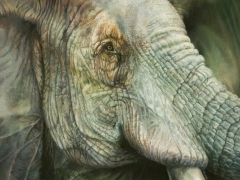 Elephant #1 (The Things I've Seen)