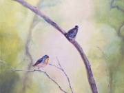 To Scale #1 (Spotted Pardalote)