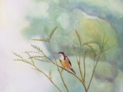 To Scale #3 (Eastern Spinebill)