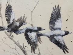 Flee (Flight Study of the Australian Magpie)