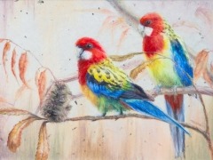 Rosellas In Red