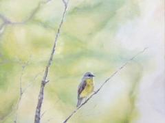 To Scale #2 (Eastern Yellow Robin)